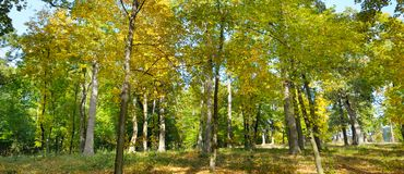 Autumn forest and fallen yellow leaves. Wide photo. stock photos