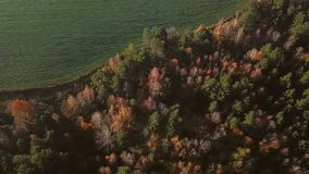Autumn forest and field of harvest. Video footage aerial top view. Yellow and green trees stock footage