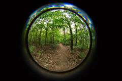 Autumn forest and fisheye lens Royalty Free Stock Image