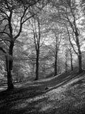 Autumn Forest Floor Stock Photography