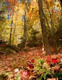 Autumn Forest Floor y toldo Fotografía de archivo libre de regalías