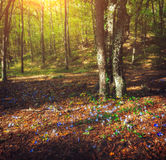 Autumn forest with flowers at sunset. Beautiful landscape Stock Photo