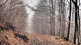 Autumn, forest, fog, amazing. royalty free stock photo