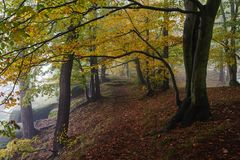 Autumn forest with fog Royalty Free Stock Image
