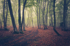 Autumn forest in fog. Beautiful natural landscape. Vintage style Stock Photography
