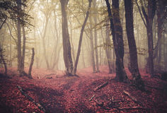 Autumn forest in fog. Beautiful natural landscape. Vintage style Stock Photos