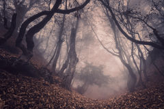 Autumn forest in fog. Beautiful natural landscape. Vintage style. Mysterious dark old forest in fog. Autumn morning in Crimea. Magical atmosphere. Beautiful Stock Photography
