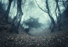 Autumn forest in fog. Beautiful natural landscape. Vintage style Stock Image