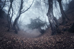 Autumn forest in fog. Beautiful natural landscape. Vintage style Royalty Free Stock Photo