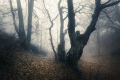 Autumn forest in fog. Beautiful natural landscape. Vintage style Royalty Free Stock Photography
