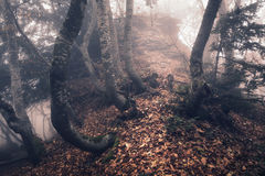 Autumn forest in fog. Beautiful natural landscape. Vintage style Stock Images