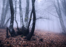 Autumn forest in fog. Beautiful natural landscape. Vintage style Royalty Free Stock Images