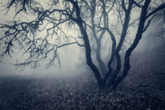 Autumn forest in fog. Beautiful natural landscape. Vintage style Royalty Free Stock Image