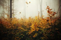 Autumn forest with fog and falling leaves. Falling leaves blown by wind in mysterious autumn forest. Mysterious fantasy fairy tale forest with fog in late autumn royalty free stock photos