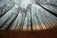 Autumn Forest Fog Royalty Free Stock Photos