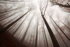 Autumn Forest Fog Royalty Free Stock Image