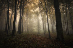 Autumn in forest with fog and light Royalty Free Stock Photography