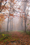 Autumn forest in fog Stock Image