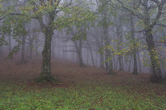 Autumn in the forest with fog,Monte Cucco NP, Umbria, Italy Stock Photos