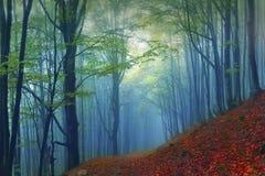 Autumn forest in the fog Stock Photos