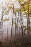 Autumn forest in the fog Stock Images