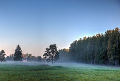 Autumn forest in the fog Royalty Free Stock Photos