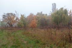 Autumn Forest Fog Pluie humidité Paysage Chemin photo stock