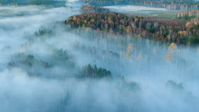 Autumn forest in the fog. Time Lapse Royalty Free Stock Images