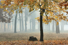 Autumn forest in fog. Royalty Free Stock Image