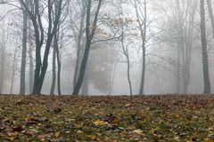 Autumn forest, fog. Trees growing in the park, photographed in the autumn season, Morning and fog Royalty Free Stock Image