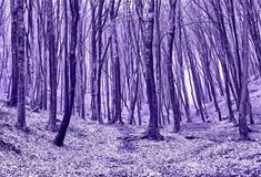 Forest in Violet. Foggy Autumn Forest in ultra violet concept stock photo