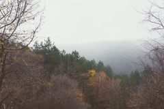 Autumn Forest In Foggy Day royalty-vrije stock afbeeldingen