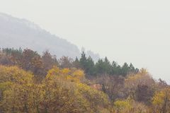 Autumn Forest In Foggy Day stock foto