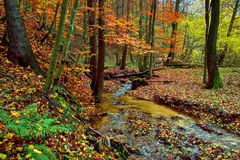 Autumn Forest with Foliage and Creek Stock Image