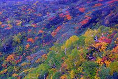 Autumn forest. Autumn foliage of a forest and shrubs in Daisetsuzan National Park, Hokkaido, Japan, which includes the highest mountain of Hokkaido, Asahidake Stock Photography
