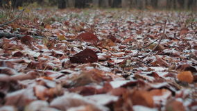 Autumn forest with folliage in snow.  stock video footage