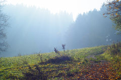 Autumn forest foothpath on morning in Pieniny mountains. Forest foothpath in Pieniny mountains on autumn morning with fog Royalty Free Stock Images