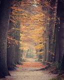 Autumn Forest Footpath fotografie stock libere da diritti