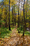 Autumn forest with a footpath Royalty Free Stock Photography