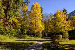 Autumn forest with a footpath and bench. Royalty Free Stock Images