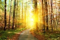 Autumn forest with footpath leading into the scene. Sunlight rays through the autumn tree branches. Copy space.  stock photography