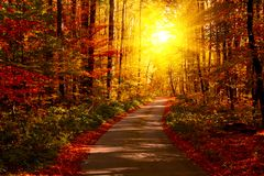 Autumn forest with footpath leading into the scene. Sunlight rays through the autumn tree branches. Copy space.  royalty free stock photo