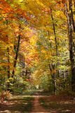 Autumn Forest Footpath Royalty Free Stock Photos