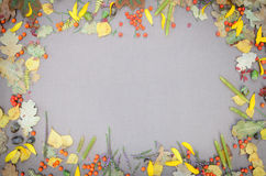 Autumn forest frame Royalty Free Stock Images