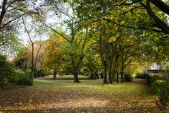 Autumn forest. Frankfurt am main Stock Photography