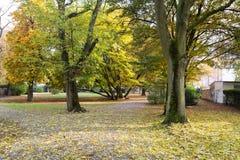 Autumn forest. Frankfurt am main Stock Photo