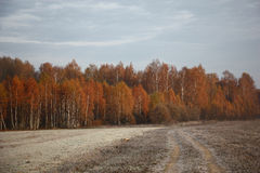 Autumn forest in frosty morning. Royalty Free Stock Photo