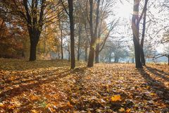 Autumn Forest frosty sunny morning. Landscape. Nature Royalty Free Stock Image