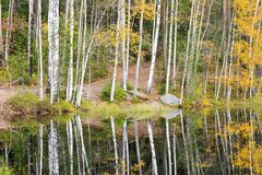 Colorful autumn forest at lake shore Royalty Free Stock Photos