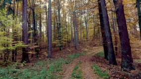 Autumn forest full of trees arranged in a stack in Poland stock video